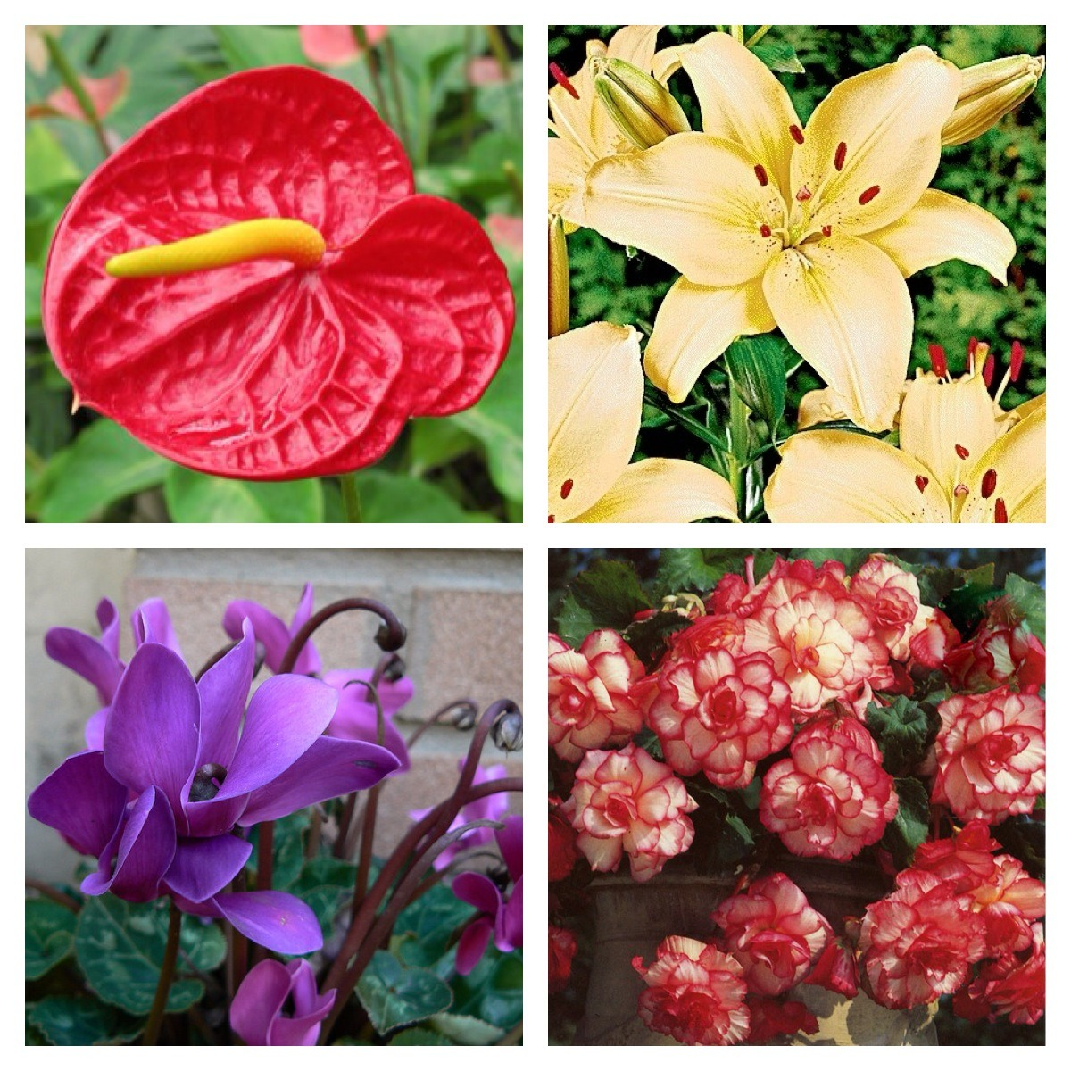 Ikea sedia giardino con piante da giardino ornamentali for Piante ornamentali da giardino prezzi